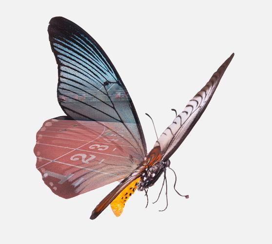 Ein Schmetterling mit einer Spiegelung eines Stadions